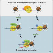 New aspect of gene regulation