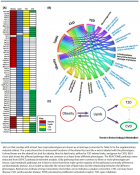 GWAS as a Driver of Gene Discovery in Cardiometabolic Diseases