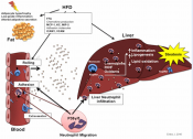 A new target for the treatment of fatty liver disease