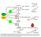 A transcription factor regulates plant defence