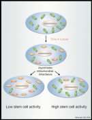 The Mitochondrial Basis of Aging