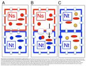 Movement of mitochondria between plant cells