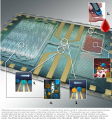 Microfluidic chip for specific leukocyte counting for HIV diagnosis