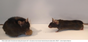 Cells found in mouse brain that signal 'stop eating'