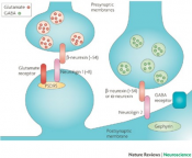 Potential new source for pain inhibition