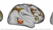 Predicting a person's distinct brain connectivity