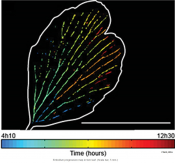 Revealing catastrophic failure of leaf networks under stress