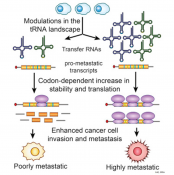 Role of t-RNAs in driving metastatic cancer