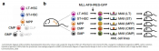 Leukemia cells of origin identified by chromatin profiling