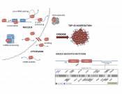 Mitochondrial localization of a RNA binding protein is required for neuronal toxicity in ALS