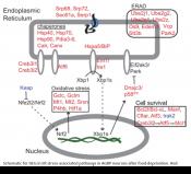 Neural hypothalamic transcriptomic changes following weigh loss