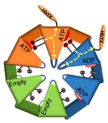 Co-operation between ATP binding subunits required for ATPase proteasome function